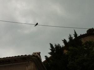 Oiseau funambule
