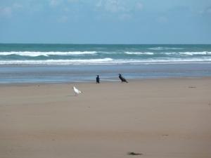 oiseaux-noirs