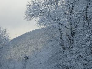 7_Vosges 365